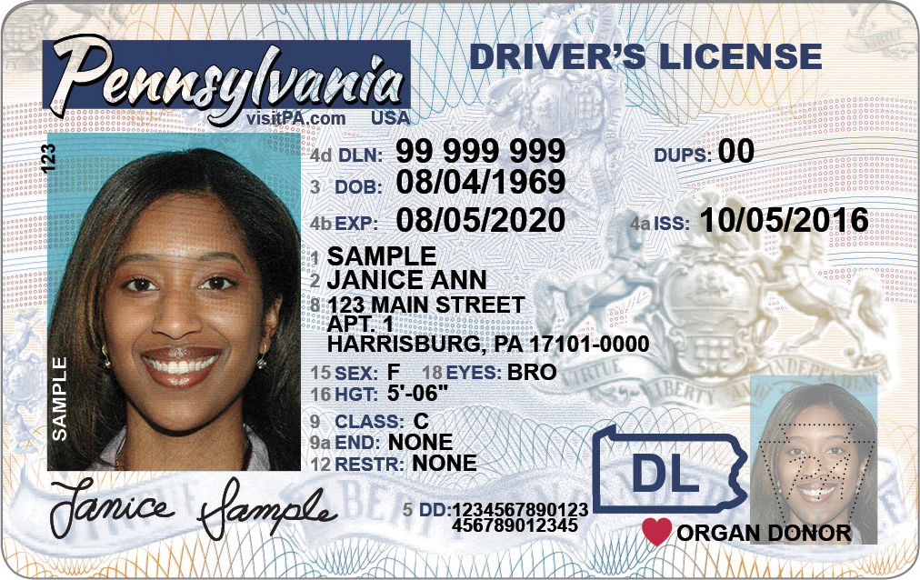 Adult Driver License Image
